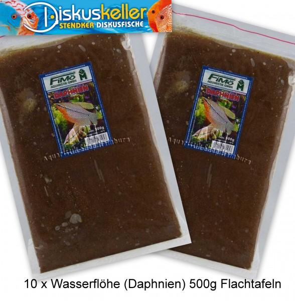 10 x Wasserflöhe (Daphnien) 500g Flachtafeln