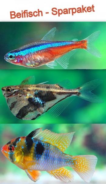 Beifisch Sparpaket 100-200 Liter (20x Roter Neon + 1 Paar Schmetterlingsbuntbarsche + 10 Beilbäuche)