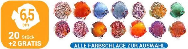 20 + 2 Gratis Diskusfische 6,5 cm alle Farbschläge