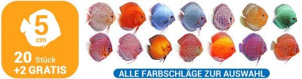 20 + 2 Gratis Diskusfische 5 cm alle Farbschläge maximale Farbauswahl