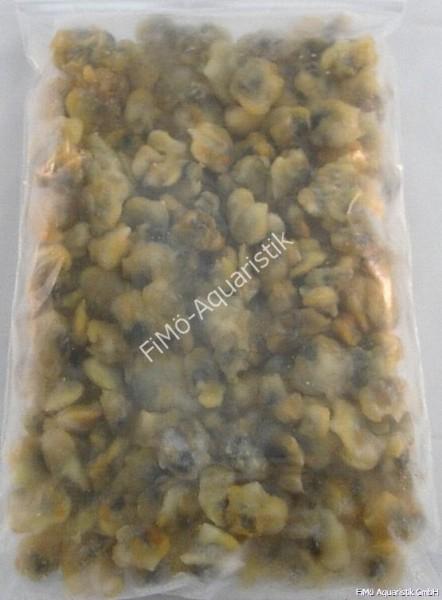 Herzmuscheln ganz (lose eingefroren) 1 kg Flat Pak
