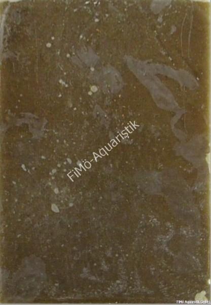 Moina (sehr kleine Wasserflöhe) 1 KG Flat Pak (Flachtafel)