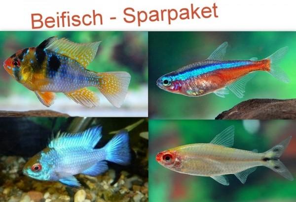 """50x Roter Neon + 30x Rotkopfsalmler + 4 Paare Schmetterlingsbuntbarsch """"Wildform"""" und """"Electric Blue"""