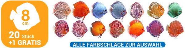 20 + 1 Gratis Diskusfische 8 cm alle Farbschläge