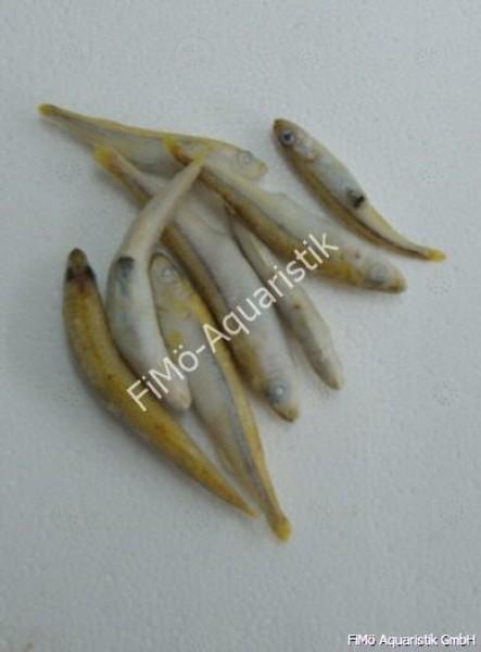 Stinte, kleine Fische (lose eingefroren) 100 g