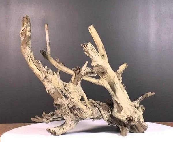 Diskusgold Wurzel Amazonwood XL - schwere Qualität - ca. 45 x 35 x 45 cm