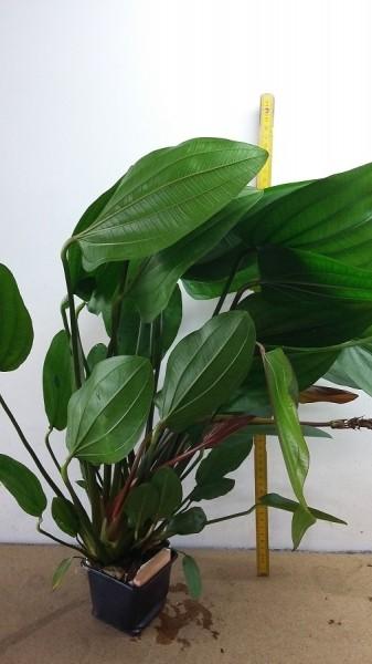 Wasserpflanzen Set 5: bestehend aus 20 Pflanzen für alle Bereiche