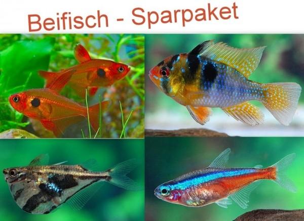 Beifisch Sparpaket 200-300 Liter (30x Roter Neon + 2 Paare Schmetterlingsbuntbarsche + 20 Beilbäuche