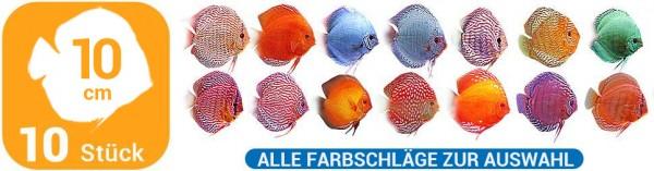 10 Diskusfische in 10 cm aus allen Farbschlägen